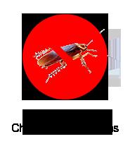 control-cucarachas