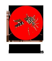 control-mosquito