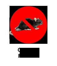 control-roedores