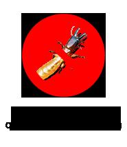 control-termitas